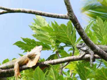 Costa Rica, der Garten Eden Zentralamerikas (2018)